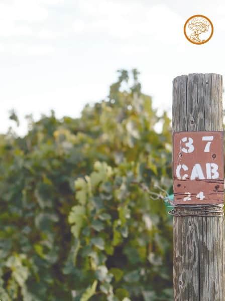 Wines 23